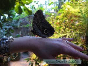 Collodi Buttefly House, una farfalla sul mio polso