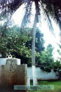 Le palme del nostro giardino, con Marcus intento a prenderci il cocco