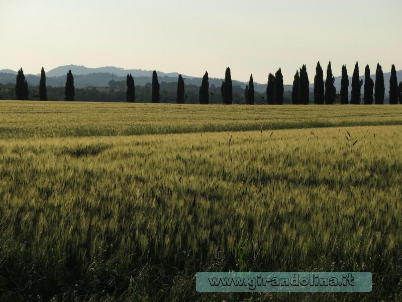 Tour settimanale  alla scoperta delle città della Toscana Centrale