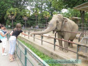 Zoo Pistoia Girandolina e l' elefante