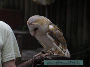 Zoo Pistoia spettacolo dei falconieri