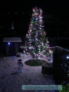 Il nostro Albero di Natale del giardino, in una nevicata di qualche anno fa