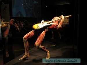 Body Worlds Firenze