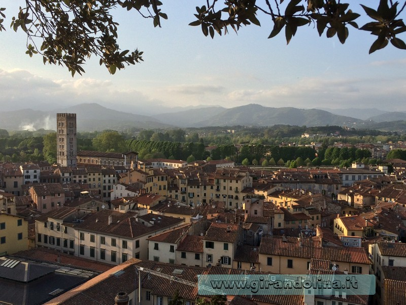 Lucca vista dall' alto della Torre Guinigi