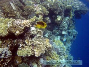 Snorkelling nella Barriera Corallina di Sharm El Sheikh