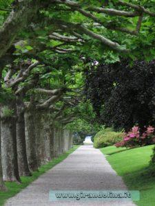 Il Viale di Platani nel parco di Villa Melzi