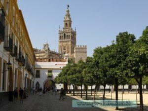 La Cattedrale di Siviglia,Patio de los Naranjos