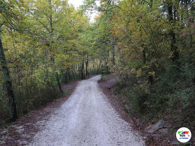 Il Cantico della Natura e il suo bosco