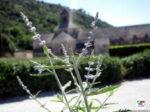 Abbazia di Senanque, Provenza, Francia