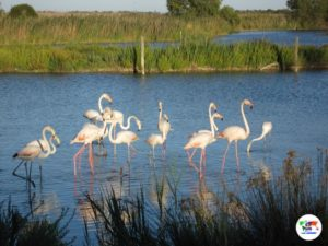 Parc Ortnitologique de Pont de Gau, Camargue- Francia