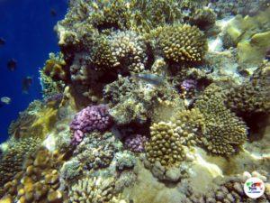 Barrierra Corallina Sharm El Sheikh- Egitto