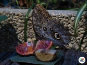 Butterfly House, Villa Garzoni Pistoia