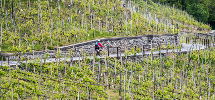 Rent a Bike in Valtellina, alla scoperta dei paesaggi tipici pedalando in bici