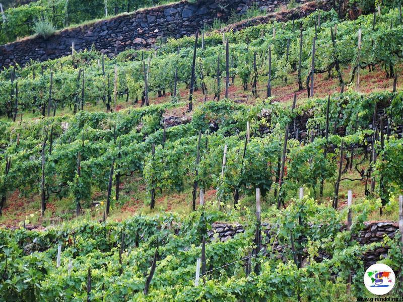 I vitigni della Valtellina