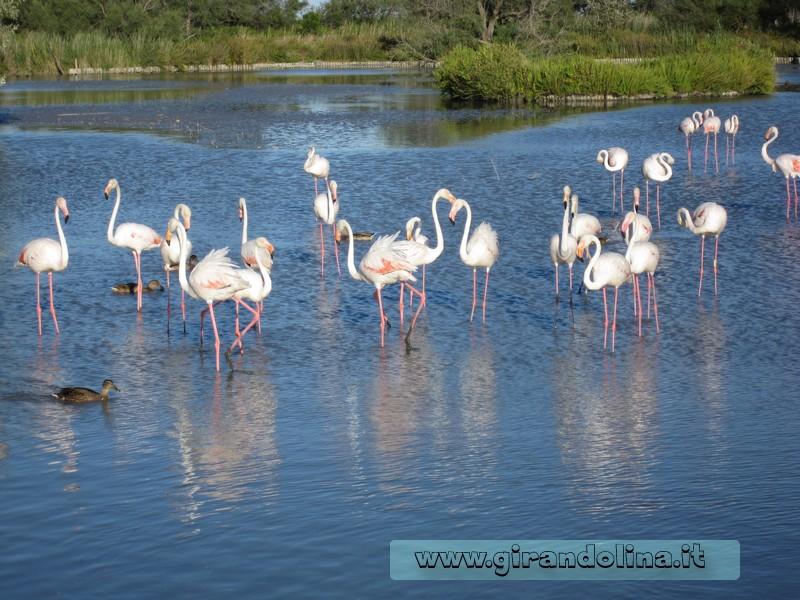 Camargue -Il Parc Ornithologique de Pont du Gau