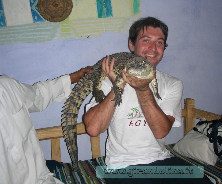 Coccodrillo Egitto