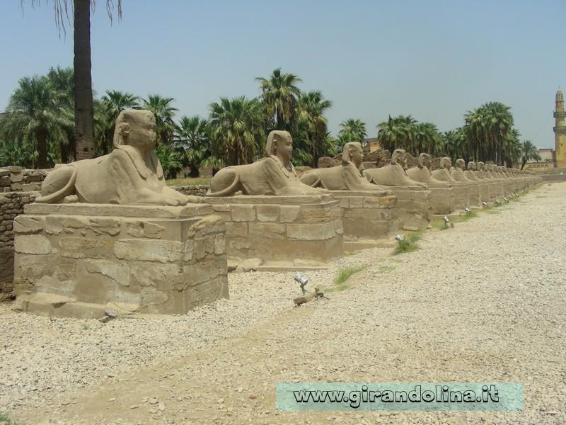 Tempio Luxor Sfingi Egitto