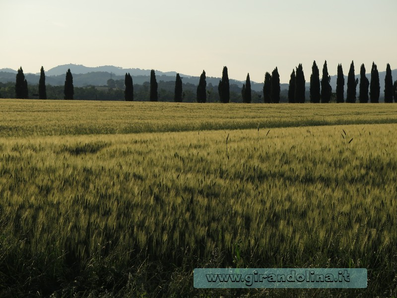 Val d 'Orcia Filari Cipressi