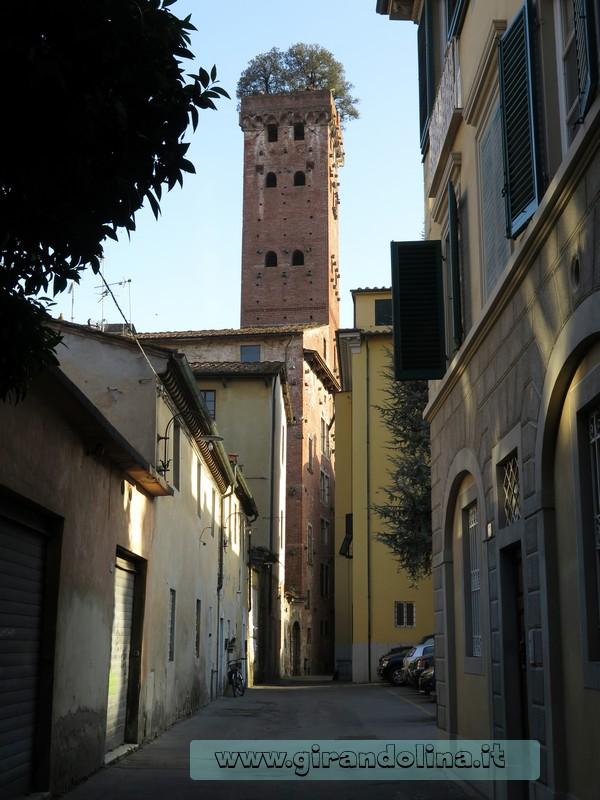 La Torre Guinigi, Lucca