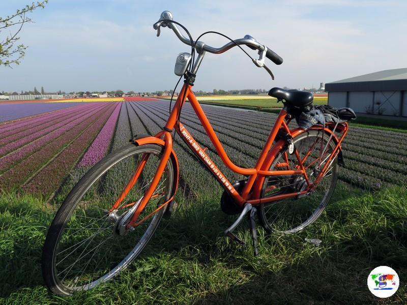Keukenhof, il parco più bello del mondo, i dintorni, noleggio bici