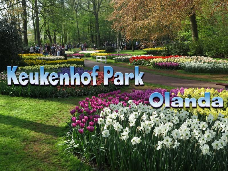 Keukenhof Park Olanda, il video del giardino botanico più bello al mondo