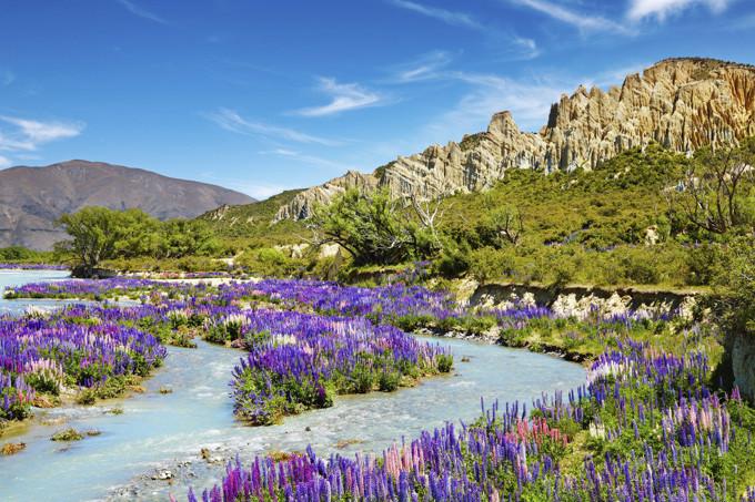 Le destinazioni più colorate in primavera, Nuova Zelanda ( photo credits Skyscanner)