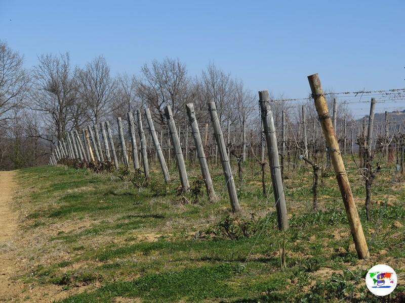 L'Azienda Agricola Pomario le vigne