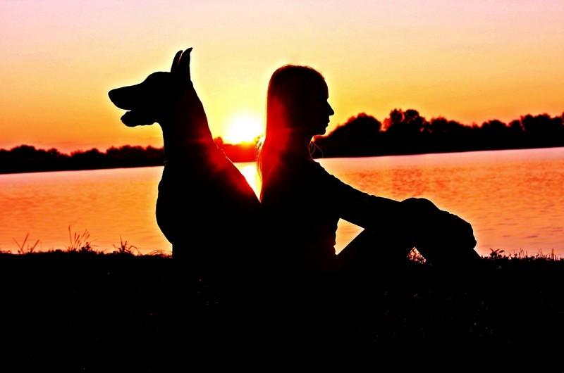 Trasloco a 4 zampe: come organizzare un trasferimento all'estero con un cane