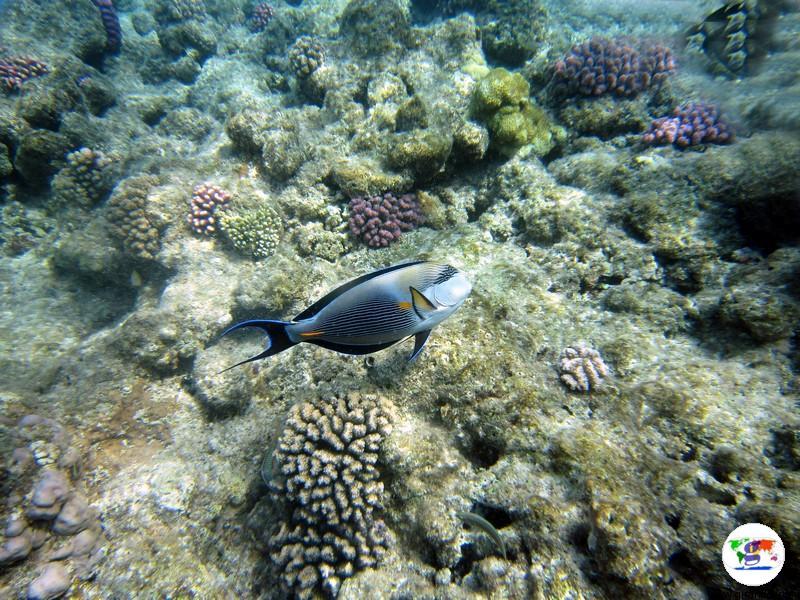 Egitto- la Barriera Corallina