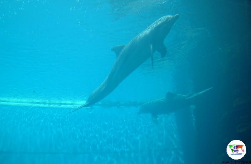 Visitare Genova, l'Acquario di Genova