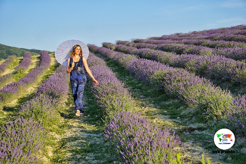 Itinerario lavanda in Toscana, Pieve Santa Luce